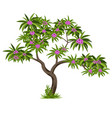 tropical tree with flowers for garden scene or vector image