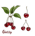 cherries with leaves sketch vector image vector image