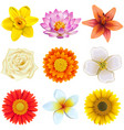 flower icons set 2 vector image vector image