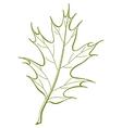 leaf of oak iberian vector vector image vector image