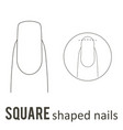 nail shape square vector image