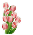 realistic tulips bouquet vector image