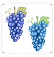 Watercolor grape with leaves in vintage style vector image vector image