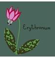 Erythronium plant vector image vector image