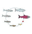 round stages salmon fish growth set from parr vector image vector image