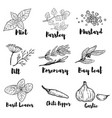 set of spice and herbs isolated on white vector image vector image
