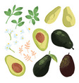 summer set with avocado leaves and flowers vector image vector image