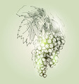 tassels grapes vector image