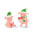 new year pigs with gift boxes in hat and scarf vector image vector image
