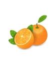 Photo Realistic Set Orange Fruits vector image