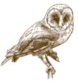 engraving drawing of barn owl vector image vector image