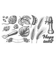 hop leaves barley wheat rye ear opener set vector image