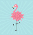pink flamingo standing on one leg flower body vector image