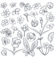 Set hand drawn spring flowers and leaves