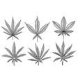 set marijuana leaf in engraving style vector image vector image