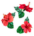 three beautiful red hibiscus flowers with leaves vector image