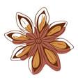 cinnamon flower christmas celebration spice flower vector image vector image