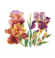Flower of iris drawing by watercolor hand drawn vector image vector image