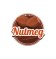 Nutmeg Spice vector image vector image