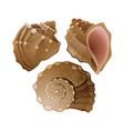 set graphic seashells vector image