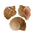 set of graphic seashells vector image vector image
