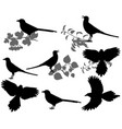 magpie silhouette vector image vector image