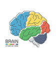 brain anatomy with flat color design and outline vector image