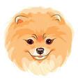 cute dog pomeranian vector image vector image