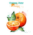 orange fruit watercolor juicy colorful vector image vector image