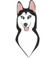 siberian husky head vector image vector image