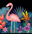 tropical and exotic garden with flemish vector image vector image