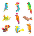 collection cute colorful tropical parrots vector image