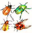 collection realistic colorful beetles vector image