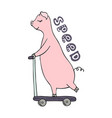 hand-drawn pig riding on a scooter vector image vector image