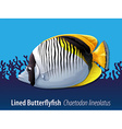 Lined butterflyfish swimming in the sea vector image vector image