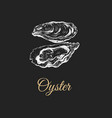 oyster sketch vector image vector image