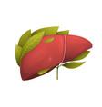 healthy human liver metaphor flat vector image