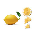 a few lemon slices and fruit with leave on white vector image vector image