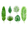tropical plants exotic eco nature green leaves vector image