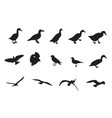 black and white silhouettes various birds vector image vector image