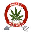 Organic marijuna-cannabis vector image vector image