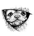 bulldog puppy vector image vector image