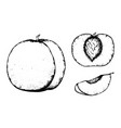 fruit sketch black and white fruit sketch hand vector image vector image