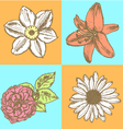 Lily daisy and rose narcissus flower sketch vector image