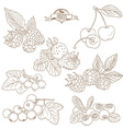 Set of Outline hand drawn berries blackberry vector image vector image