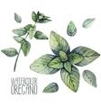 Watercolor oregano set vector image vector image