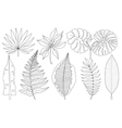 set of tropical palm leaves black vector image