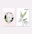 botanical greeting card wedding tender soft rose vector image