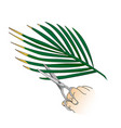 care for indoor plants pruning dried palm leaves vector image