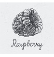hand drawn raspberry engraving style hand vector image vector image